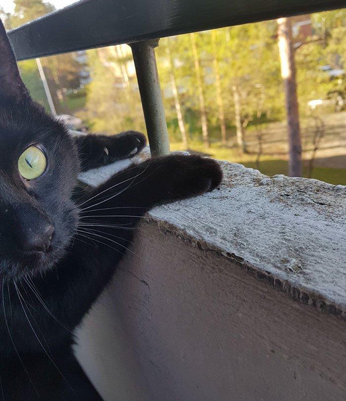Нуке такое времяпрепровождение понравилось балкон, впечатления, животные, кот, нука, улица, фото, эмоция