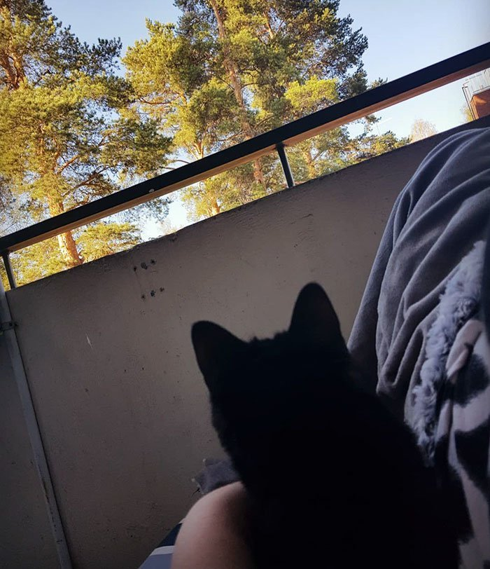"""""""Он никогда не был уличным котом"""", - рассказывает девушка балкон, впечатления, животные, кот, нука, улица, фото, эмоция"""