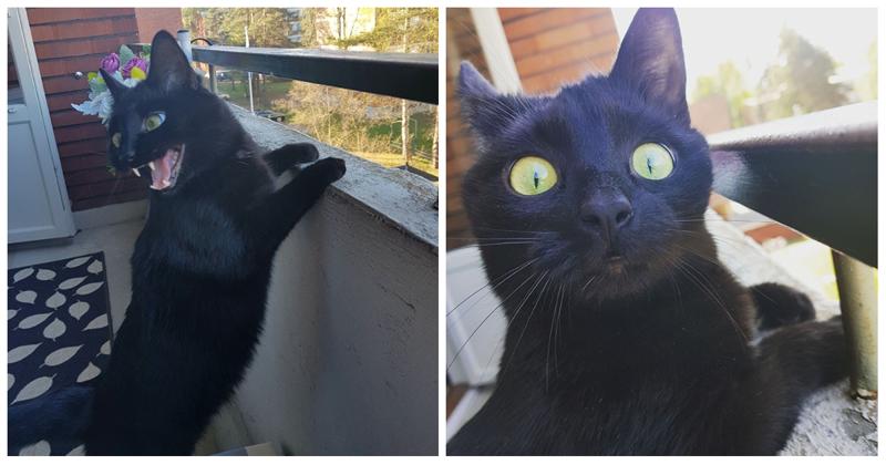Увидел мир: неподдельные эмоции кота, впервые выпущенного на балкон балкон, впечатления, животные, кот, нука, улица, фото, эмоция