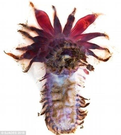 """В Индонезии поймали более 12 тысяч """"инопланетных"""" морских существ ynews, интересно, исследования, морские животные, морские существа, новости, фото, экспедиция"""