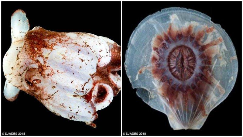 В ходе изучения найденных морских обитателей ученые надеются обнаружить больше интересных видов. ynews, интересно, исследования, морские животные, морские существа, новости, фото, экспедиция