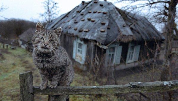 В Госдуме предложили отдать молодым пустующие дома Толстой, госдума, жилье, заброшенные дома, инициатива, предложение