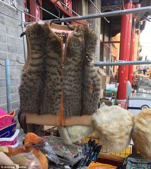 Шокирующие снимки из Хух-Хото, административного центра Внутренней Монголии, автономного района Китая: на рынке продают жилеты из кошачьего меха, причем это мех домашних кошек внутренняя монголия. китай, жилеты, китай, коготь тигра, кошачий, мех, незаконно