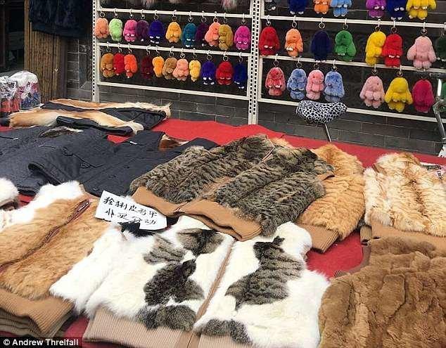 Кошачий мех любой раскраски и любой породы - все, что захочет покупатель внутренняя монголия. китай, жилеты, китай, коготь тигра, кошачий, мех, незаконно