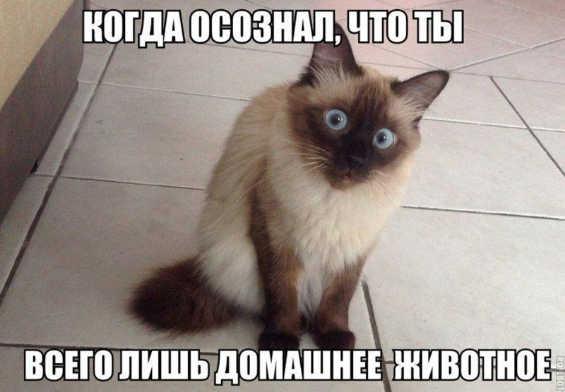 Субботний котопост забавные кошки., коты, кошки, приколы с котами, смешные картинки с котами