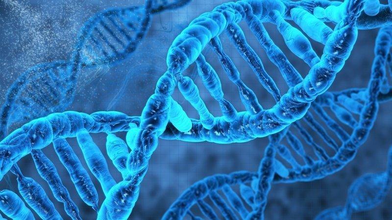 ДНК история, сны., факты