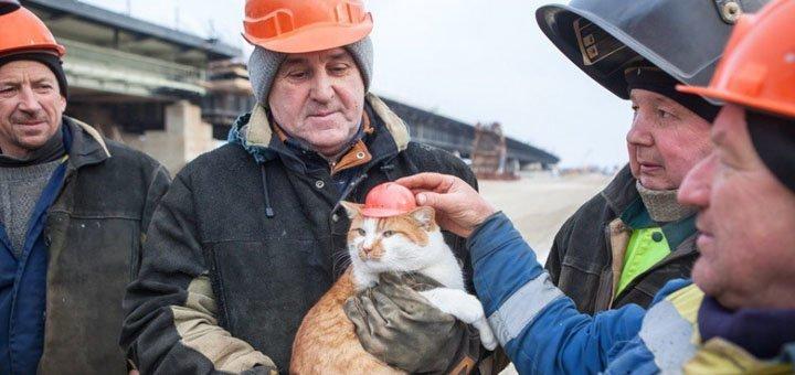 Путина обскакал котик история, коты, факты