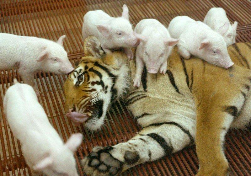 Забавные и милые животные заряжают позитивом животные, коты, прикол, юмор