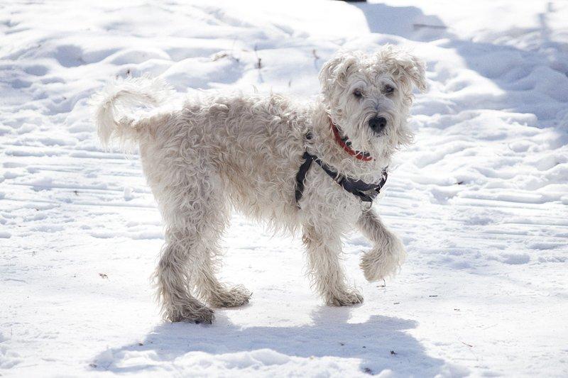 Почему вы разочаруетесь, когда заведете собаку? животные, ошибки, собака, собаки, содержание животных
