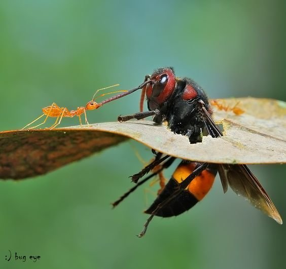Из жизни насекомых букашки, жизнь, насекомые, фото