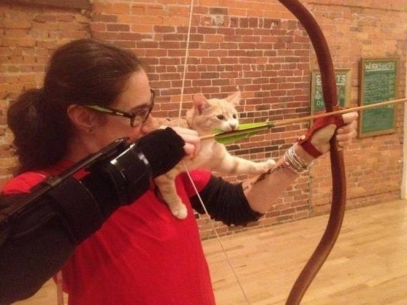 25 котиков, забравшихся в необычные места животные, котики, коты, юмор