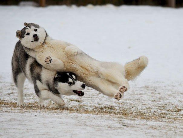 11. Две секунды — полет нормальный животные, кадр, прикол, собака, юмор