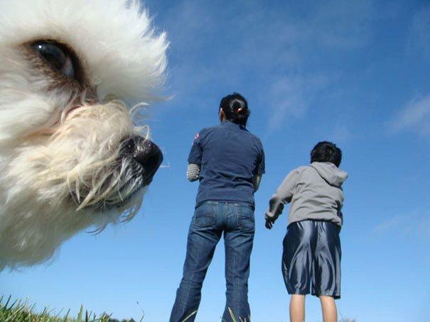 8. Собака-подозревака животные, кадр, прикол, собака, юмор
