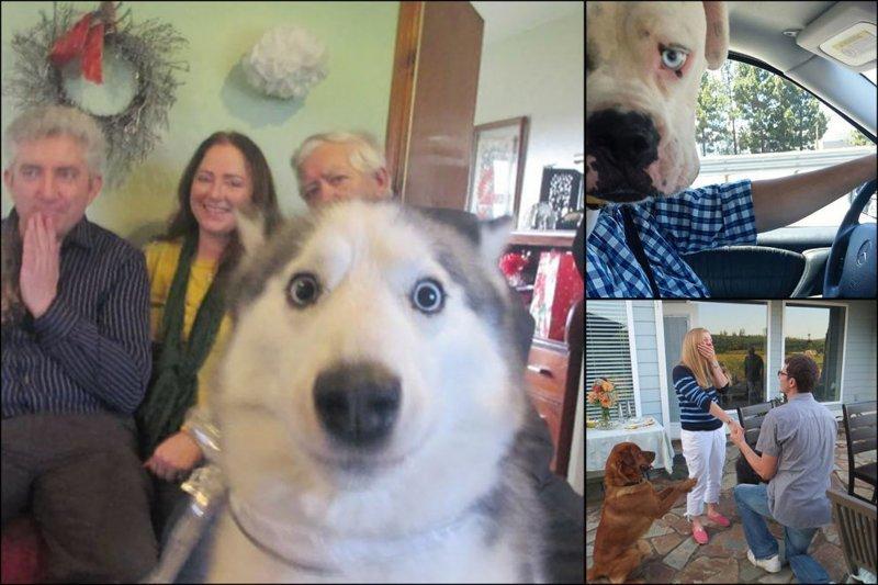 """""""Я твой фото хвостом шатал"""". 18 кадров, испорченных наглыми собаками животные, кадр, прикол, собака, юмор"""