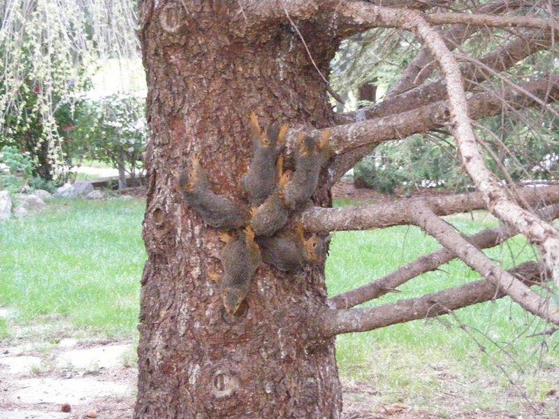 Шесть бельчат попали в природную ловушку и спутались хвостами белки, животные, ловушка, спасение, хвост