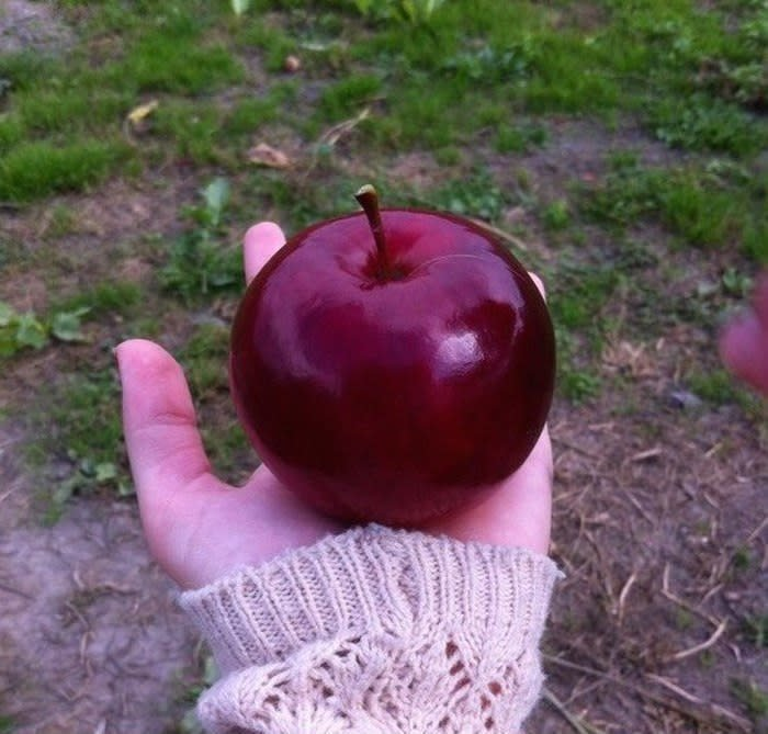 Самое красивое в мире яблоко аппетитно, блюда, вкусно, как снимать еду, продукты, слюнки текут, фото, фотографии еды