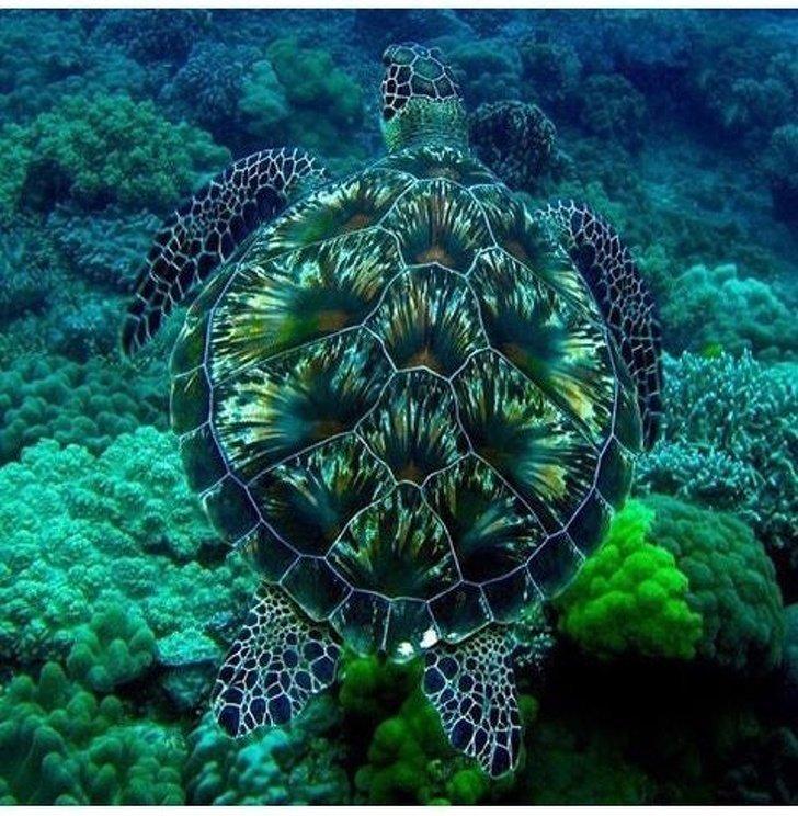 6. Эта черепаха с таким же успехом могла бы быть произведением искусства без фотошопа, вы не поверите, места, природа, реальность, удивительные, чудеса