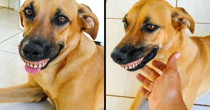 22. Пес случайно нашел и примерил зубные протезы. У хозяина от смеха случилась истерика без фотошопа, вы не поверите, места, природа, реальность, удивительные, чудеса