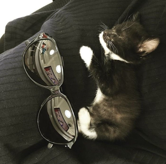 Сотрудникам компании, где работает Вин, питомцев разрешают брать с собой на работу. Люцифер был всегда рядом с хозяйкой. Вин работала, а он спал у нее на коленях! Добрые дела, до и после, добрые люди, животные, кот, котенок, спасение, фото