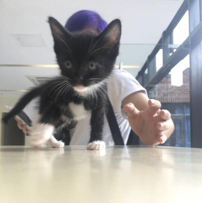 """Через некоторое время Люцифер начал с интересом исследовать офис, его """"мама"""" только и успевала за ним бегать Добрые дела, до и после, добрые люди, животные, кот, котенок, спасение, фото"""