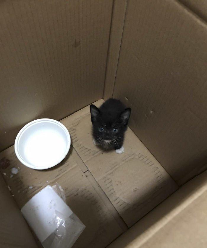 Первая встреча Вин с котенком Добрые дела, до и после, добрые люди, животные, кот, котенок, спасение, фото
