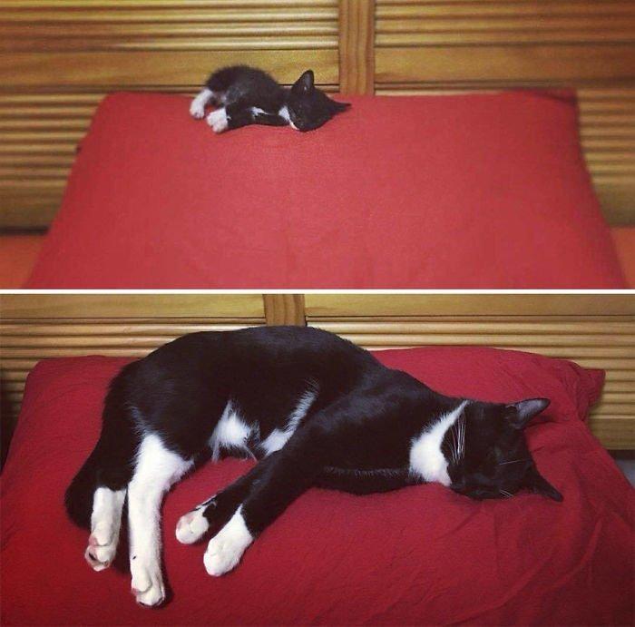 Вот такая кото-история! Добрые дела, до и после, добрые люди, животные, кот, котенок, спасение, фото
