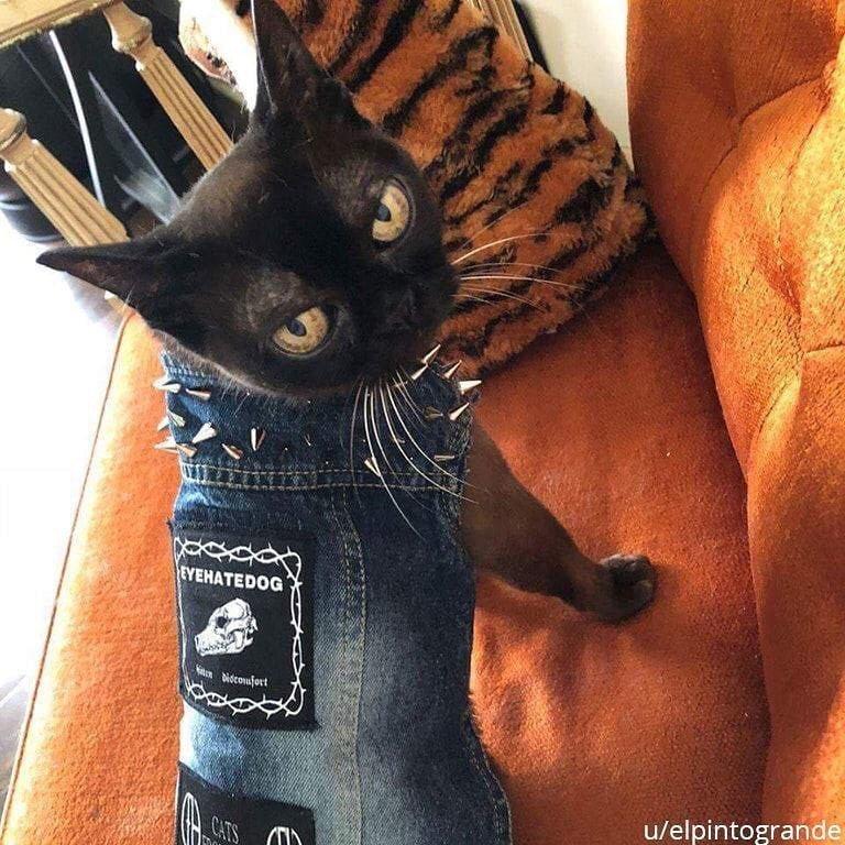 «Подруга сшила коту панк-рокерский джинсовый жилет» архив, кадр, прикол, семейное фото, семья, фото, юмор