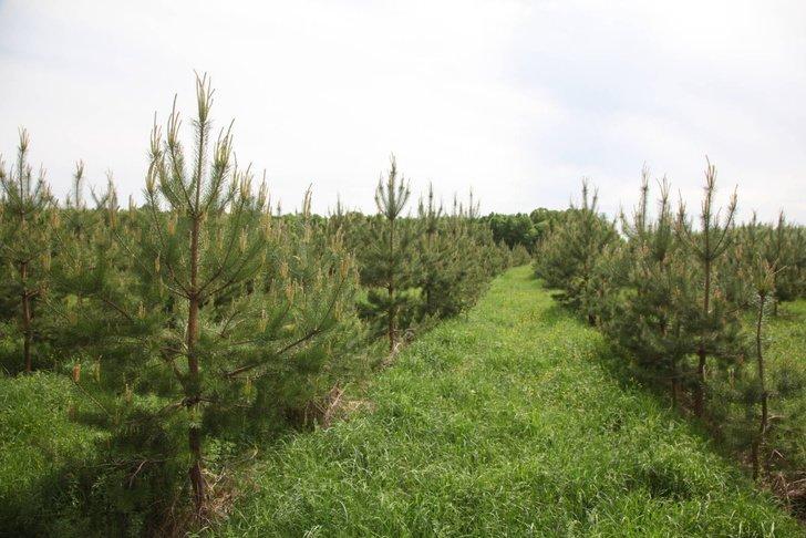 В Татарстане высадили 20 млн деревьев в весенний сезон Хорошие, добрые, новости, россия, фоторепортаж