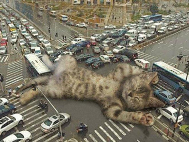 9. Сладкий сон гигант, город, котзилла, кошка, фотоманипуляция, фотошоп, художник