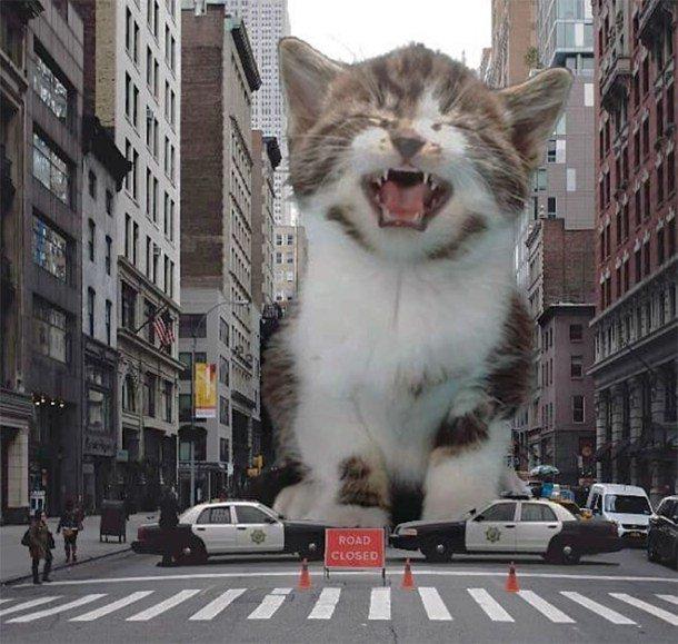 6. Довели до слез гигант, город, котзилла, кошка, фотоманипуляция, фотошоп, художник