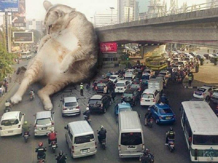 10. Присел на минутку гигант, город, котзилла, кошка, фотоманипуляция, фотошоп, художник