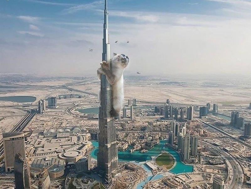 4. Карабкается на вершину гигант, город, котзилла, кошка, фотоманипуляция, фотошоп, художник