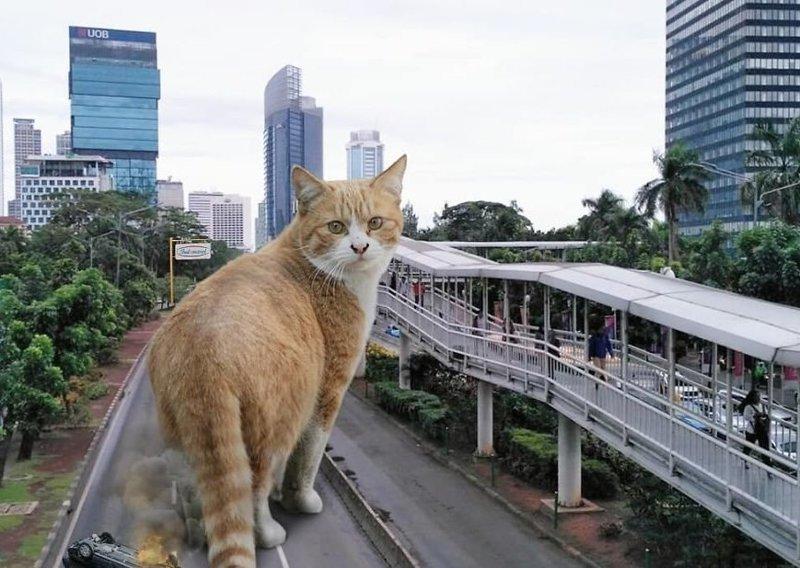 3. Вышел прогуляться гигант, город, котзилла, кошка, фотоманипуляция, фотошоп, художник