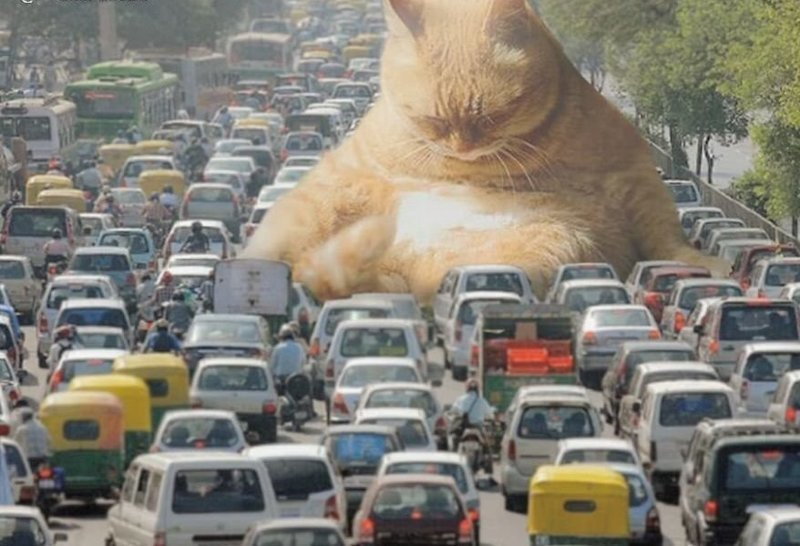 2. Уснул гигант, город, котзилла, кошка, фотоманипуляция, фотошоп, художник