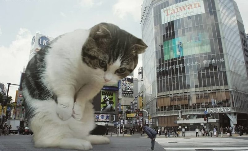 7. Спасибо гигант, город, котзилла, кошка, фотоманипуляция, фотошоп, художник