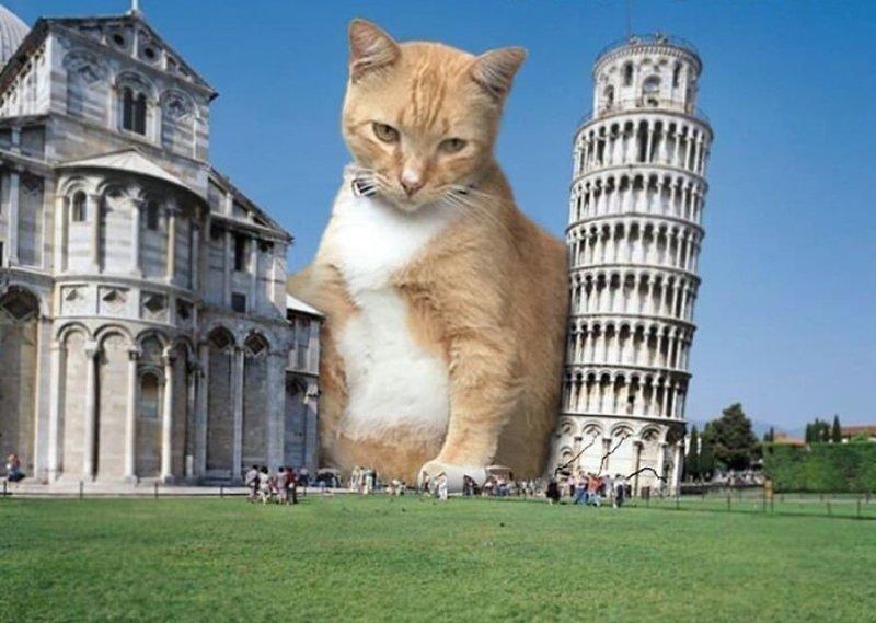 12. Ростом с башню гигант, город, котзилла, кошка, фотоманипуляция, фотошоп, художник
