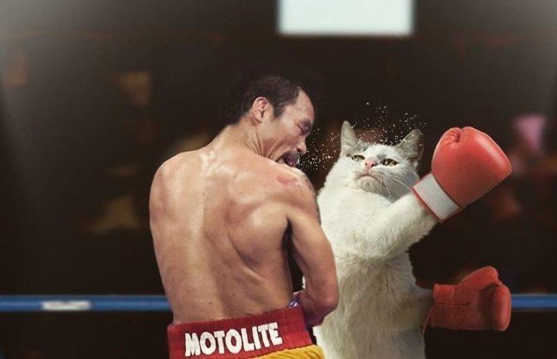 11. Кот-боксер гигант, город, котзилла, кошка, фотоманипуляция, фотошоп, художник