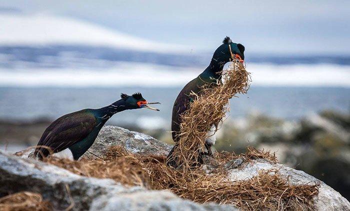 """22. """"Куда потащил, паразит!"""" (фото: Дмитрий Уткин) Comedy Wildlife Photography Awards, животные, конкурс, природа, смех, фотография, юмор"""
