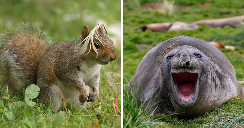 20 смешных фотографий животных с конкурса Comedy Wildlife Photo Awards 2018 Comedy Wildlife Photography Awards, животные, конкурс, природа, смех, фотография, юмор