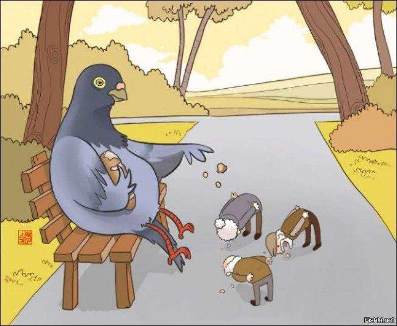 Картинки, смешные рисунки с голубями