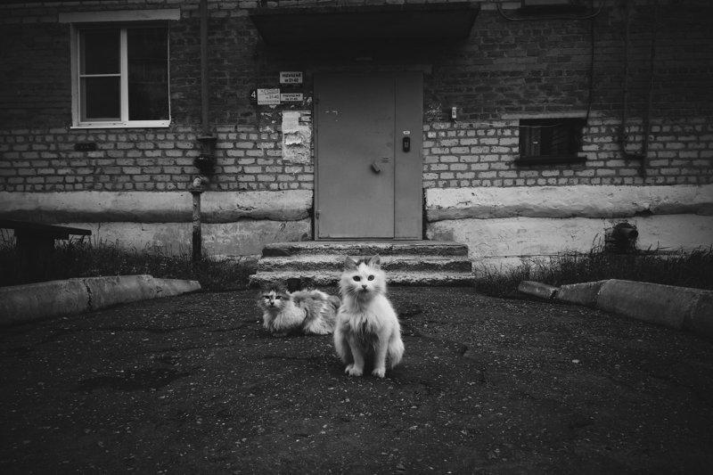 Очень колоритные уличные коты город, кот, кошки, уличная жизнь, эстетика