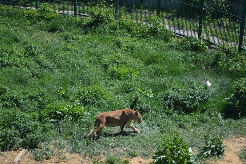 Будете в Пензе, обязательно зайдите в местный зоопарк. Тут хорошо! Помимо известных вам лемуров, здесь живет огромное количество интересных животных животные, звери, зоопарк, лемуры, новости, пенза, спецпроект, фишки