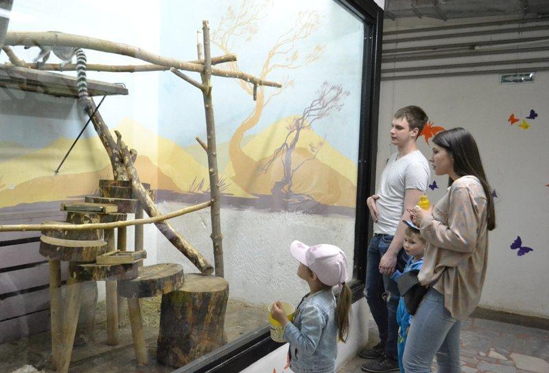 Сказать, что посетители зоопарка влюблены в эту парочку, - ничего не сказать животные, звери, зоопарк, лемуры, новости, пенза, спецпроект, фишки