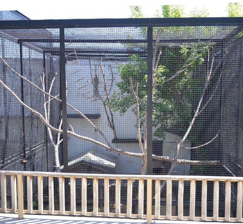 Встречайте - летний просторный дом для Юми и Фанни. Все уже готово! животные, звери, зоопарк, лемуры, новости, пенза, спецпроект, фишки