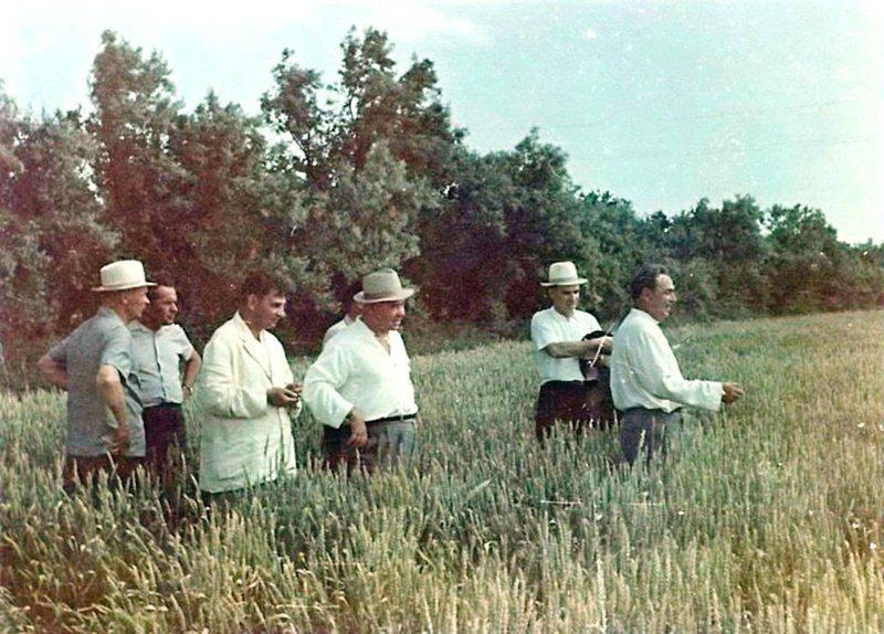 П.Е. Шелест (в центре), Л.И. Брежнев (первый справа) и сопровождающие их лица осматривают поле озимой пшеницы в Крыму. Июль 1964 г. Брежнев Л. И., СССР, история
