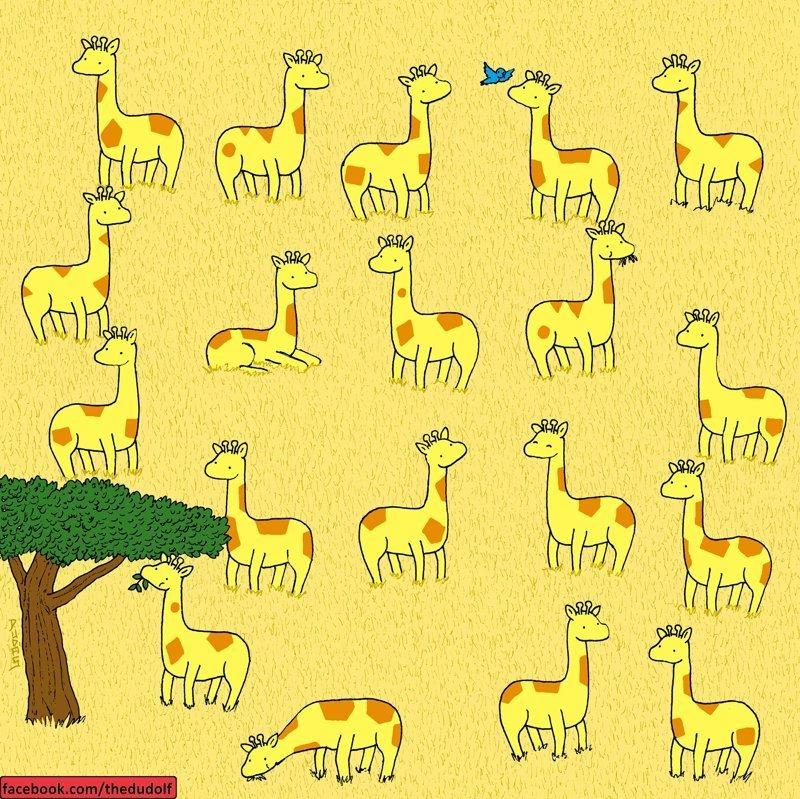 Какого из этих жирафов можно назвать уникальным, потому что у него пары? ynews, головоломка, забавно, загадка, рисунок, художник, юмор
