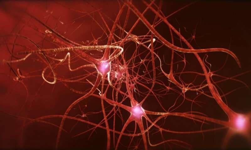 7. Рост клеток мозга у взрослых прекращается — ложь интересно, любопытно., факты