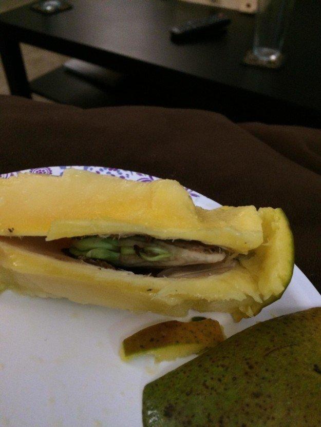 16. Проросшее манго в мире, еда, овощи, подборка, прикол, фрукты