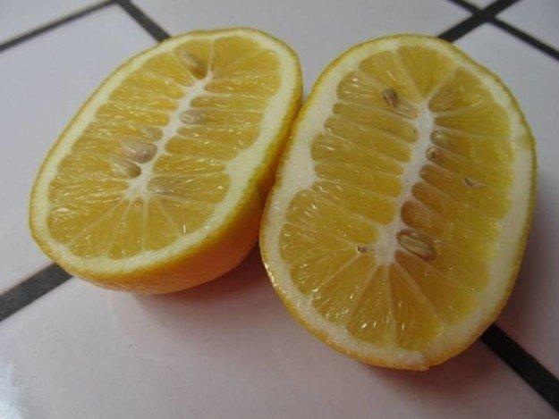 3. Неестественно большой лимон в мире, еда, овощи, подборка, прикол, фрукты