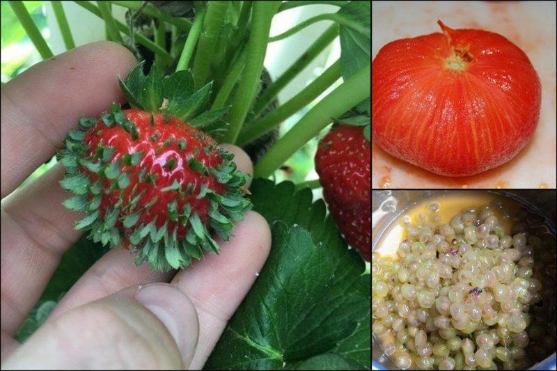 """От проросшей клубники до """"голого"""" винограда: 19 фото еды, от которых немного не по себе в мире, еда, овощи, подборка, прикол, фрукты"""